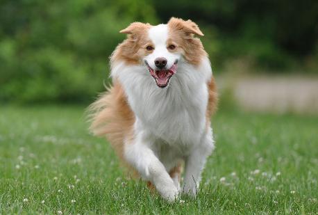 Корм с уткой и рисом для чувствительных собак Josera SensiPlus