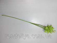 Гілочка з суцвіттям салатна