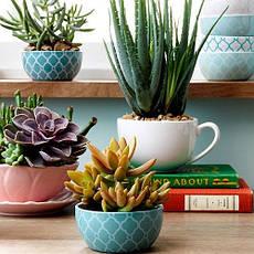 Живые растения