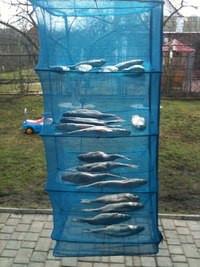 Сушилка для рыбы, грибов, фруктов