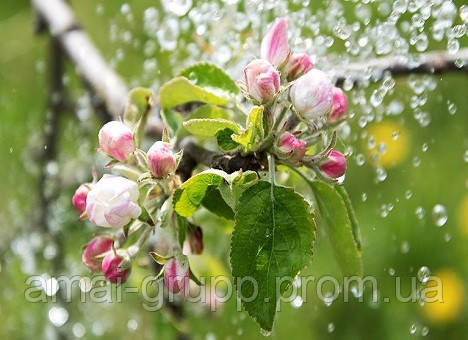 Правила полива деревьев: от саженца до взрослого дерева