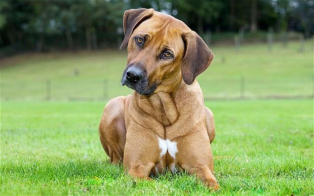 Корм для крупных собак Pronature Original Large Adult - курица и рис
