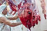 Бойня для великої рогатої худоби 20 голів/год VDZ Trading, фото 2