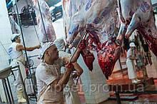 Скотобойня для крупного рогатого скота 20 голов/час VDZ Trading