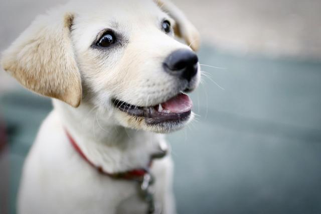 Корм для щенков малых пород 1st Choice Puppy Mini and Small Breed