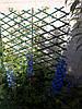 Шпалера садова пластикова декоративна решітка пергола з доставкою по Україні