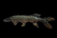 Подарок для рыбака мягкая подушка-рыба щука