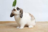 Мой первый кролик- особенности ухода