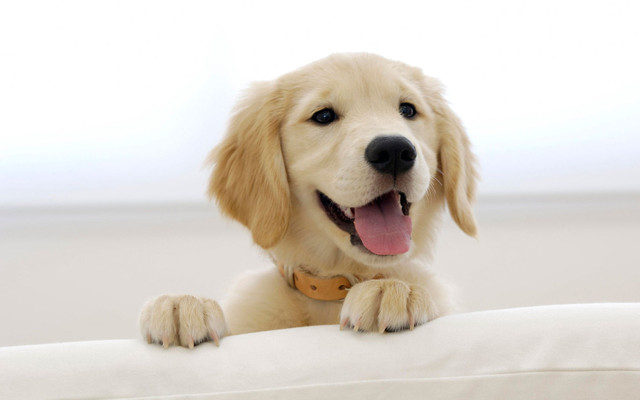 Корм для собак мини-пород 1st Choice Adult Toy & Small Breeds