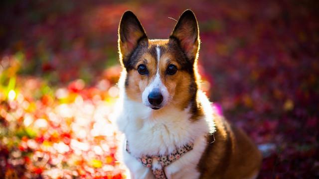 Корм для собак мини и малых пород 1st Choice Adult Mini and Small Breed