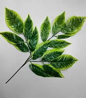 Веточка с темно зелеными листьями и салатным краем