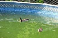 Голубой водоём или затхлое болото?