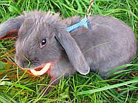 Ошейник / Светящийся ошейник для маленьких собак, для кота, для кролика, фото 1
