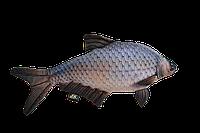 Антистрессовая мягкая рыба лещ 47*30 см