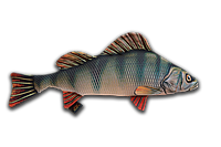 Антистрессовая мягкая рыба окунь 60*27см