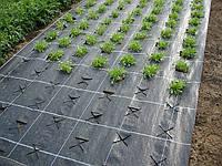 Агроткань Agreen мульчирующая 85г/м2 1,05х100 м