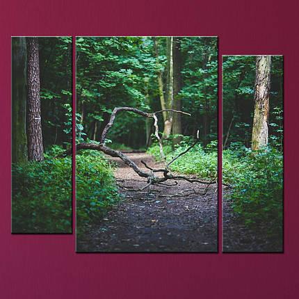 Модульная картина Лесная тропа, фото 2