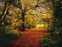 Фотообои бумажные на стену 388х270 см 8 листов:Осенний лес. Komar 8-068