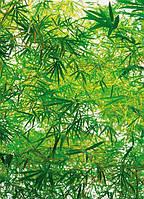 Красивые фотообои с листьями бамбука размер 254 х 183 см