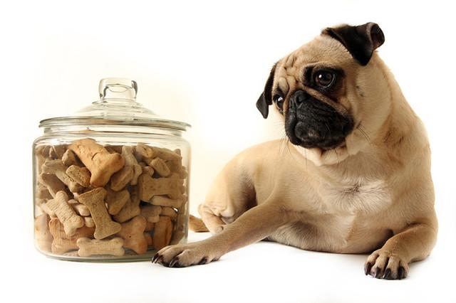 Корм для собак сухой