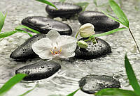 Фотообои бумажные на стену 368х254 см 8 листов: Белые орхидеи среди камней. Komar 8-319
