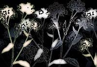 Фотообои бумажные на стену 368х254 см 8 листов: Черно белые цветы. Komar 8-898