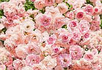 Фотообои бумажные на стену 368х254 см 8 листов: Розы пастельные. Komar 8-937