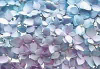 Фотообои бумажные на стену 368х254 см 8 листов: Цветы гортензии. Komar 8-961
