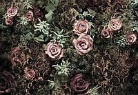 Фотообои бумажные на стену 368х254 см 8 листов: Бархатные розы. Komar 8-980