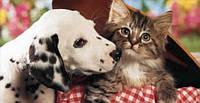 Товари для кішок і собак