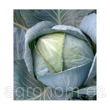 Семена капусты Отм Квин F1 2500 семян Takii Seeds