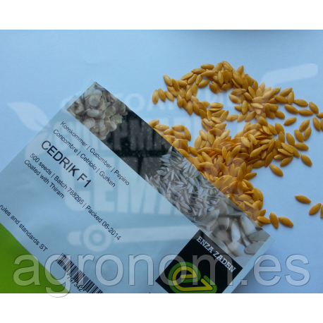 Семена огурца Седрик F1 500 семян Enza Zaden