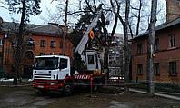 Спиливание деревьев с автовышки - обрезка сухих веток, фото 1
