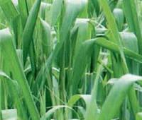 Виды и применение гербицидов