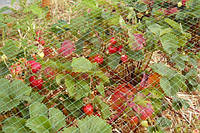 Защитная сетка от птиц зеленая 4x50 м Венгрия