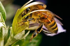 Роботи на пасіці взимку. Підгодівля бджіл.