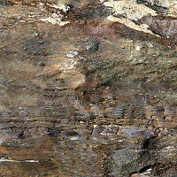 Швейцарский Пробковый пол с фотопечатью Fossil