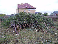 Расчистка участка Киевская область (044) 531-88-75
