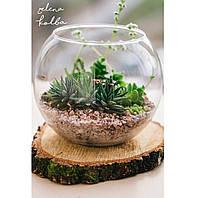 Флорариум в виде аквариума солнечный оригинальный подарок прикольный