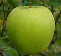 """Саженец яблони """"Мутсу"""""""
