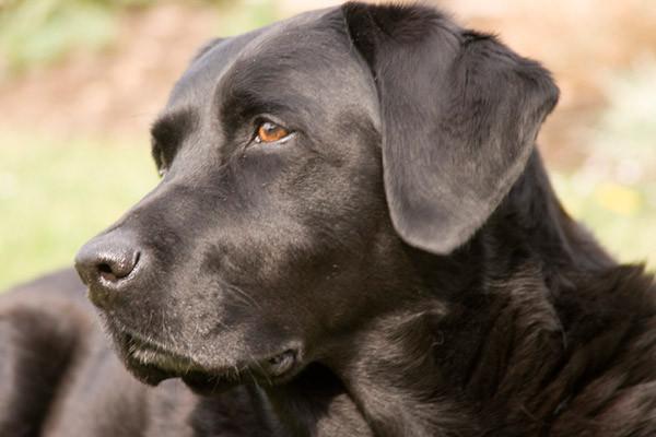 Корм для пожилых собак Arden Grange Senior