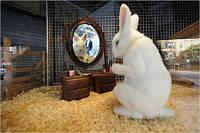 Уход за кроликом- необходимый инвентарь