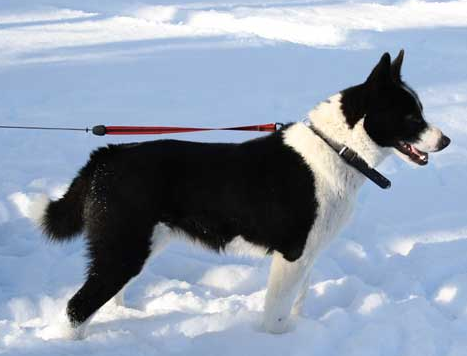 Корм для чувствительных собак Arden Grange Sensitive