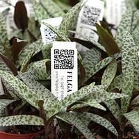 Стрелка для маркировки растений 104х18мм (1000шт)