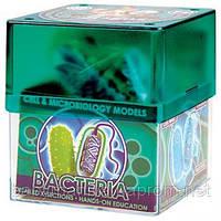 Научный игровой набор Бактерия Professor Ein-O