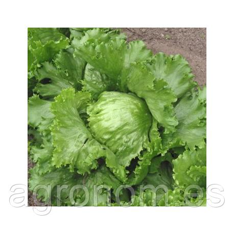 Семена салата Ника 5 грамм Enza Zaden
