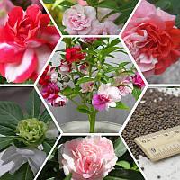 Цветы с нотами бальзамов отдушка-10 мл