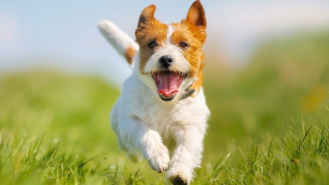 Dr. Shields хондроитин и глюкозамин для собак, с МСМ, таблетки 120шт