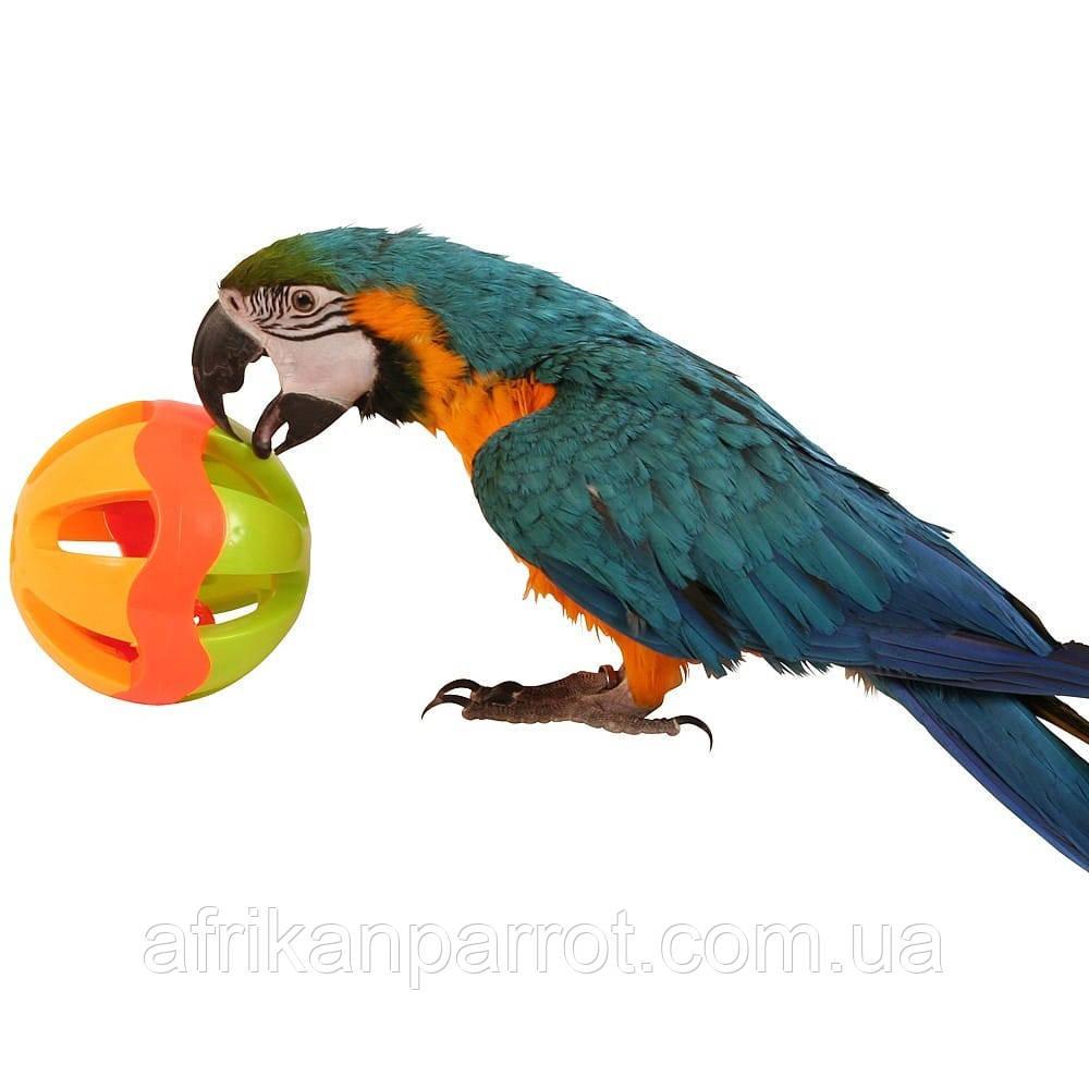 Сумасшедшая игрушки для попугая - Большой Шар