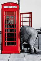 Плакат Слон и телефонная будка 1557